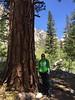 Alicia next to a big pine tree.