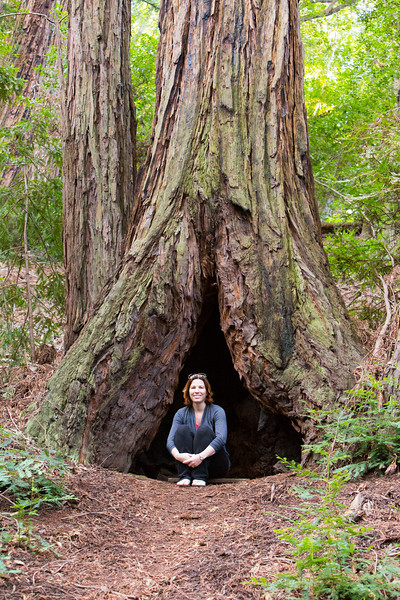 tree hollows are pretty cool, and very amazing on big trees