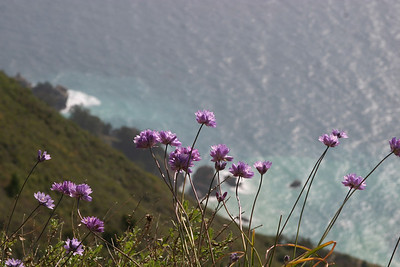 Wildflowers in Julia Pfieffer Big Sur State Park (Photo: Tien-Tien Chan).