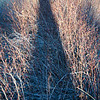"<span id=""title"">Long Shadow</span> My shadow over some very thorny bushes. They were some kind of berry, but I don't know what. Not fun to walk through in sandals, I know that."