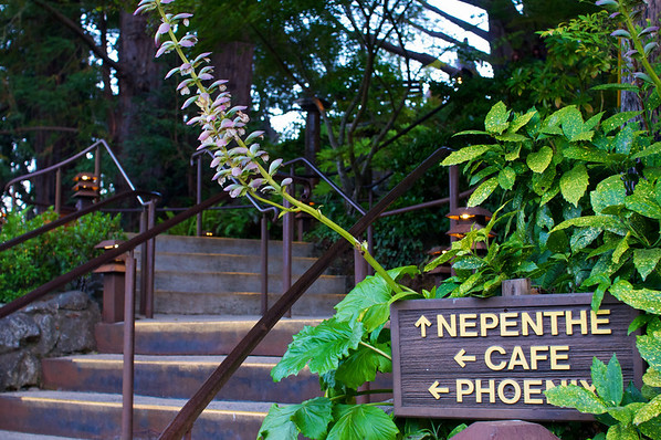 We arrived just in time to catch a sunset dinner at the Nepenthe.  Great intro to Big Sur, dinner perched over the ocean.