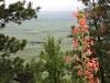A flower at the top of Kamiak Butte.