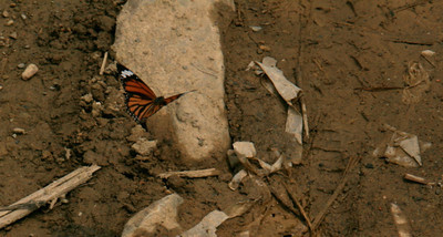 Wildlife moments happen in the most unlikely spots, like the hordes of butterflies we watched at the river crossing where the man was bathing his dog. (Adam's caption: unfortunately the butterfly got in the way of the rock I was trying to photograph.)