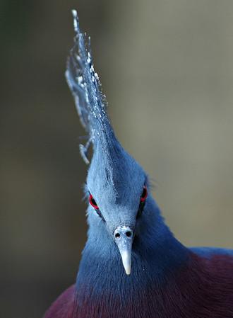 Bird Kingdom, Niagara Falls, ON  2.24.14