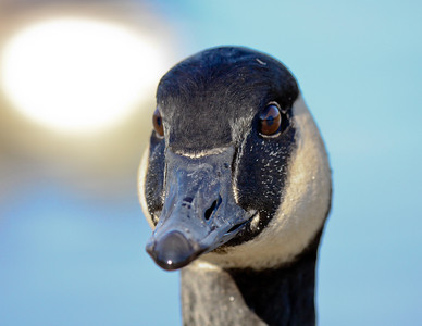 bird, birds, wildlife, nature, fauna, animal, animals, netherlands