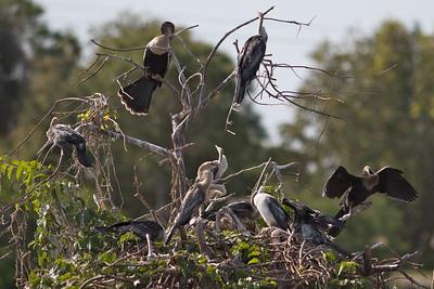 Birds of Wakodohatchee