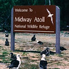 Midway Atoll is home to 2 million breeding seabirds.