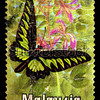 Malaysia stamp with Brookiana (1985).