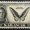 Sarawak stamp with Brookiana birdwing and King George (1950).