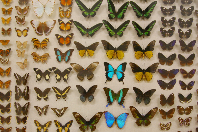 Diurnal Lepidoptera from around the world at the Bishop.