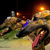 Greyhounds Birmingham Race Course