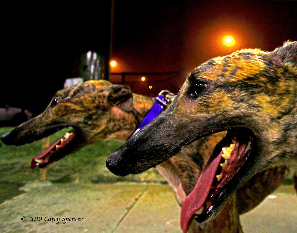 Greyhounds Birmingham Race Course