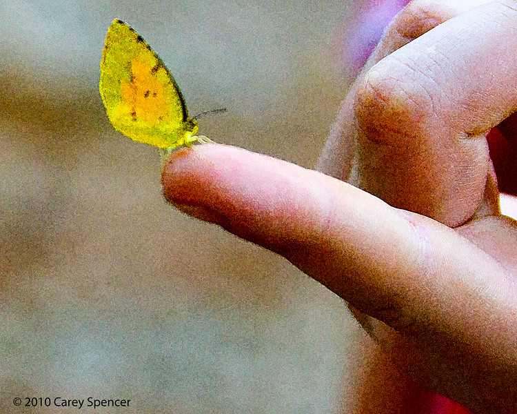 Butterfly Soft Touch