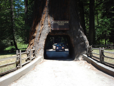 """Drive Thru Tree"" - Near Hwy 101 on Pacific Coast Hwy 2012"