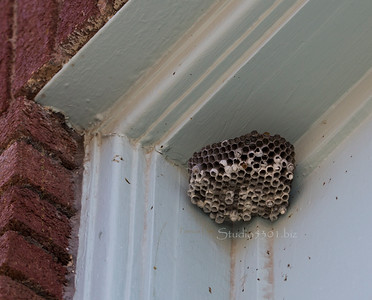 Beehive_Bisbee1215