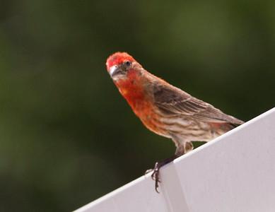 Bishbee bird_1002