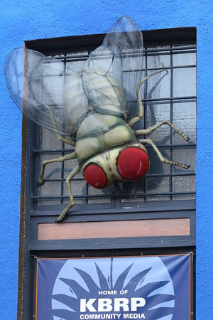 IMG_1385 fly art window
