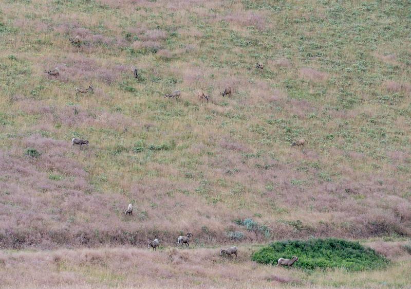 Herds Of Fun