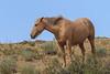 Wild Horses 109