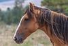 Wild Horses 114