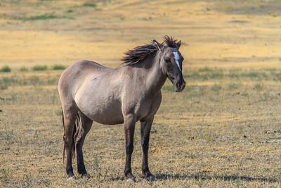 Wild Horses 103