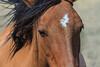 Wild Horses 102