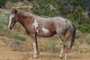 Wild Horses 108