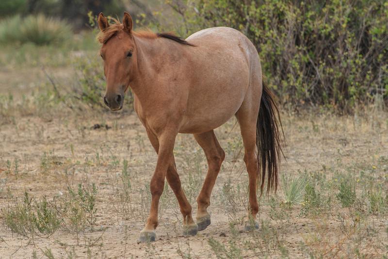 Wild Horses 118