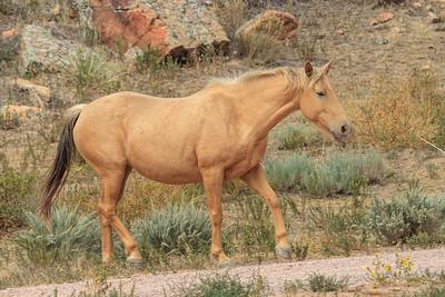 Wild Horses 110