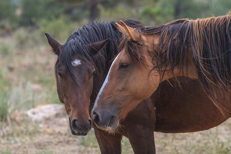 Wild Horses 115