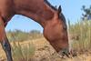 Wild Horses 112
