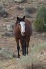 Wild Horses 111