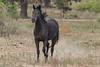 Wild Horses 120