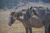 Wild Horses 101