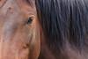 Wild Horses 122