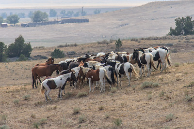 Wild Horses 104