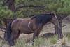 Wild Horses 124
