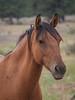 Wild Horses 121