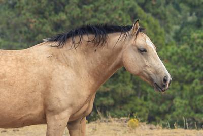 Wild Horses 107