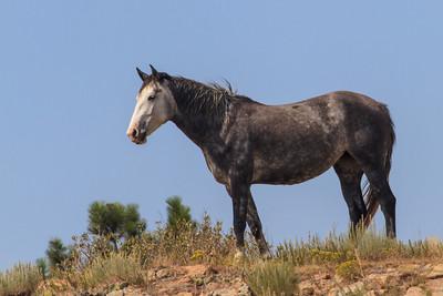 Wild Horses 105
