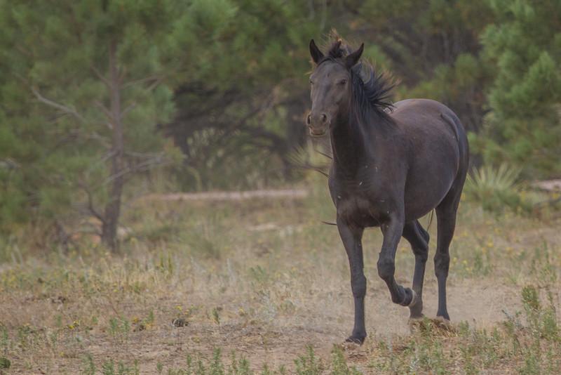 Wild Horses 116