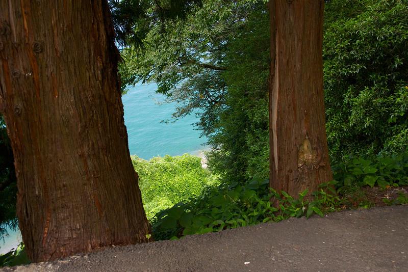 Redwoods in Batumi Botanical Garden?  _DSC4870