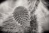 Cactus Profile