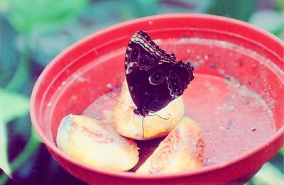 The butterfly house Blenheim Palace England - Jul 1996