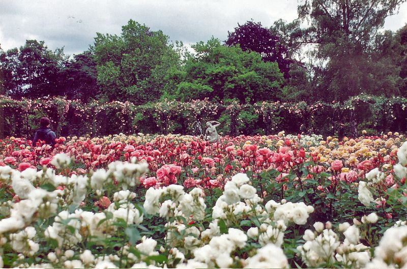 Rose gardens Blenheim Palace England - Jul 1996