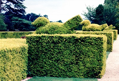 Sculptured hedges Blenheim Palace England - Jul 1996