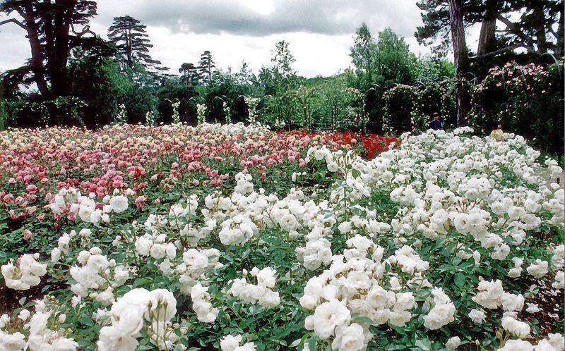 Rose gardens Blenheim Palace England - Jul 1996