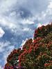 NZNorthIsland_2014_KwaiLam-5527