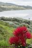 NZNorthIsland_2014_KwaiLam-0712