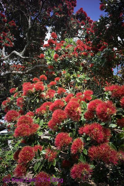 NZ2014_KwaiLam-07681